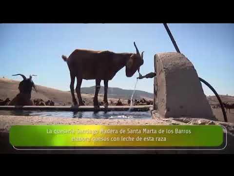 """Entrevista a María Jesús Rodríguez y Casildo Díaz, en """"La Besana"""" de Canal Extremadura"""
